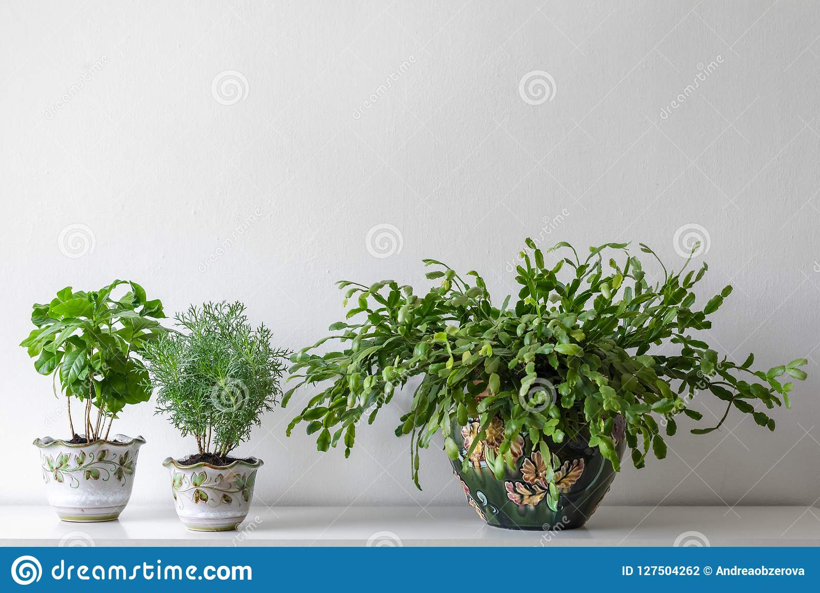 Various house plants in different pots against white wall. Indoor potted plants background with copy space.