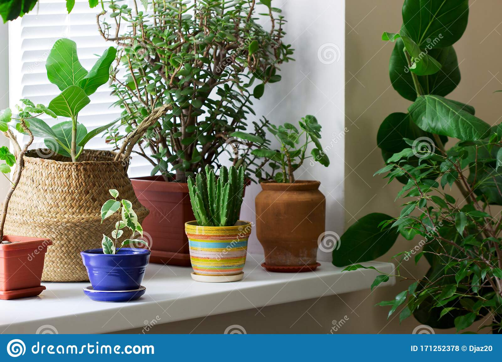 Various Indoor Plants In Pots And A Bamboo Basket On The