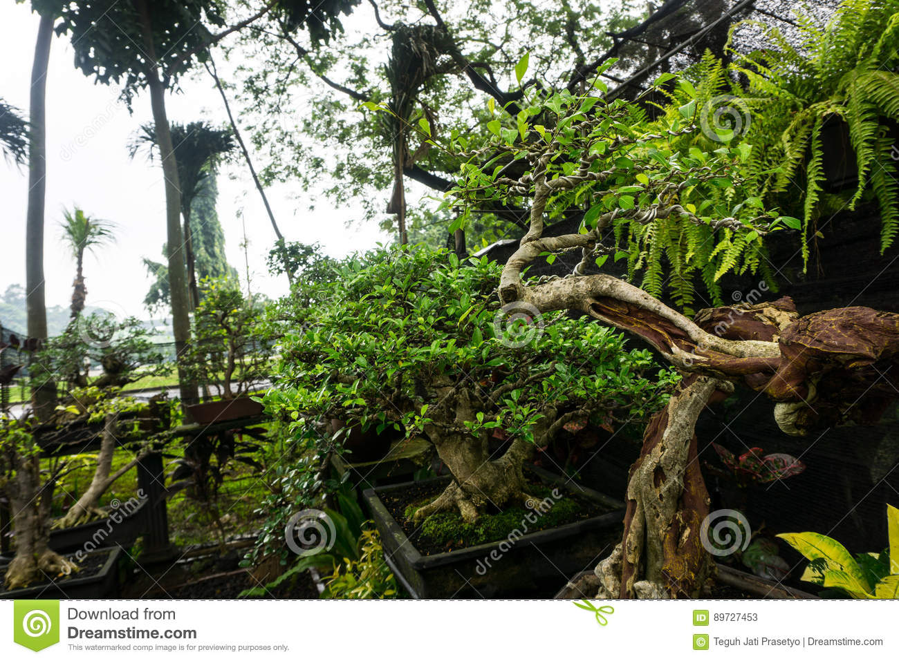Various Kind Of Bonsai Tree Sell In Plant Store For