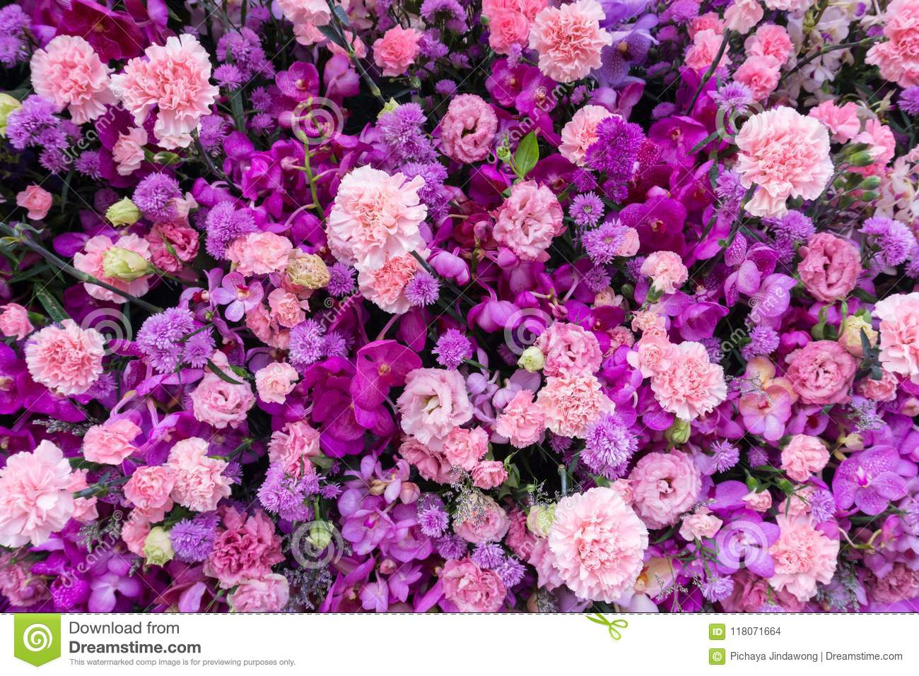 Various Pink And Purple Flower Background Top View Stock Photo Image Of Plant Carnation 118071664