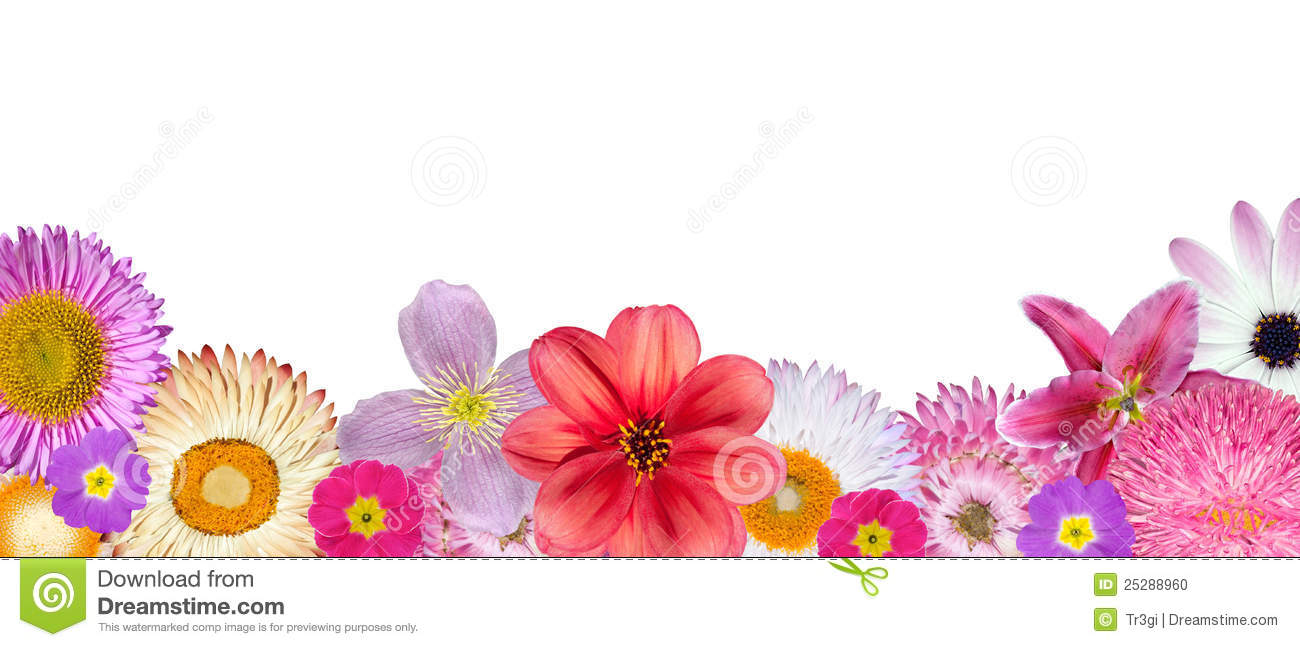 Row Of Flowers ClipartDownload Floral Borders With