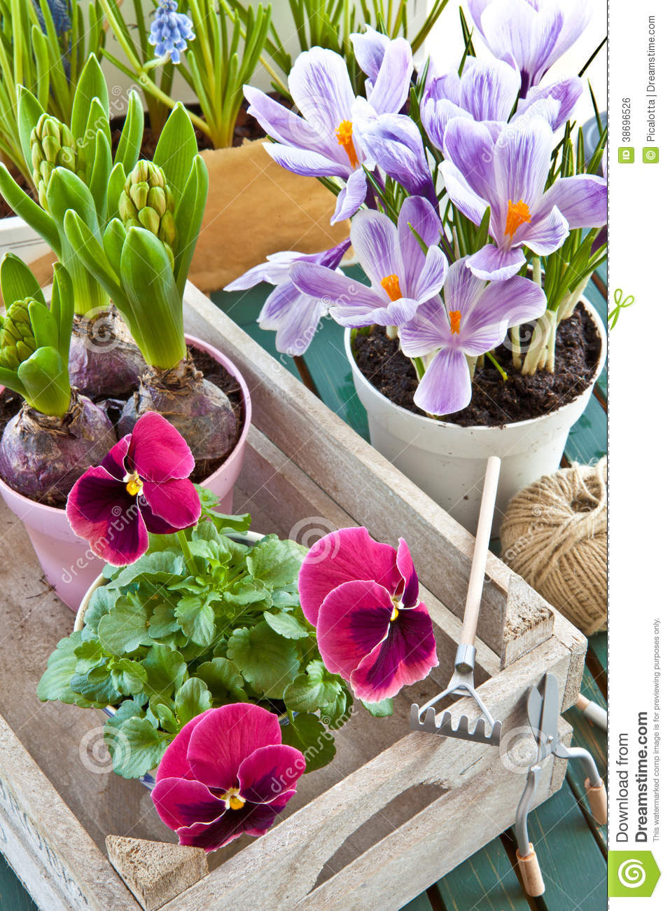 Various Potted Spring Flowers Stock Photo Image Of Petals