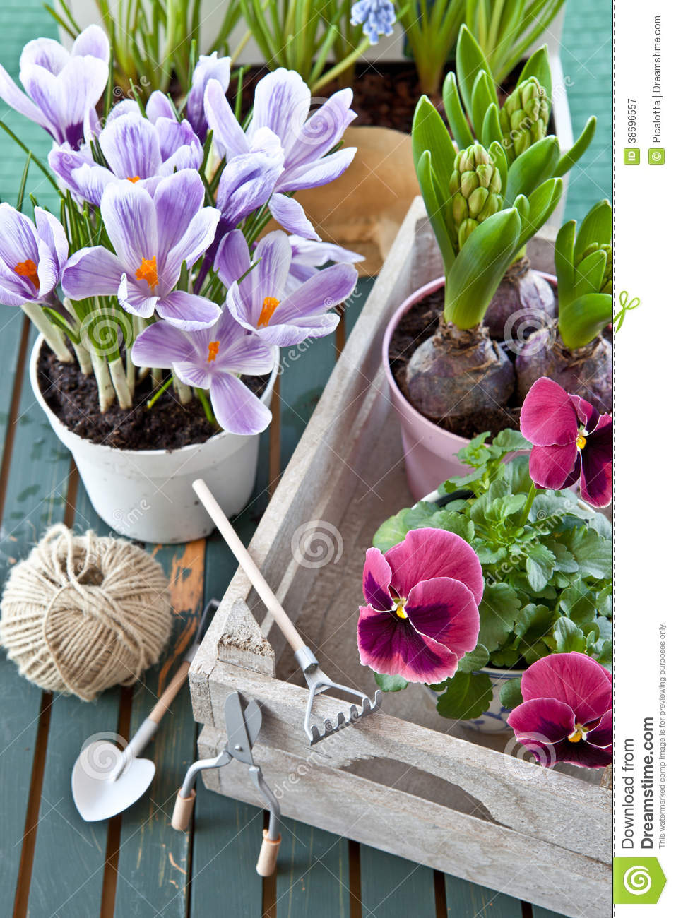 Various potted spring flowers stock image image of purple various potted spring flowers mightylinksfo