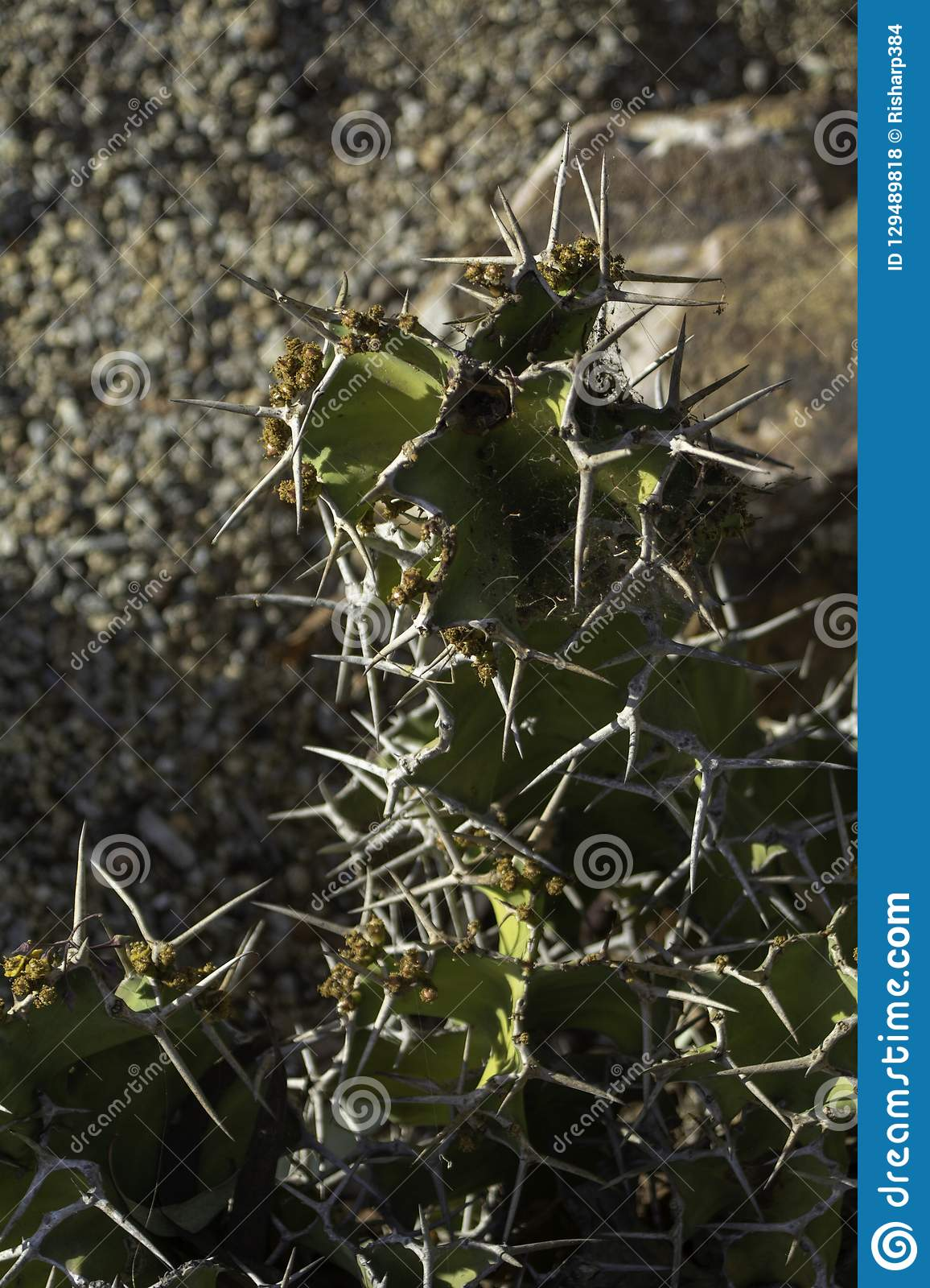 Good when cactus plants of southern california something