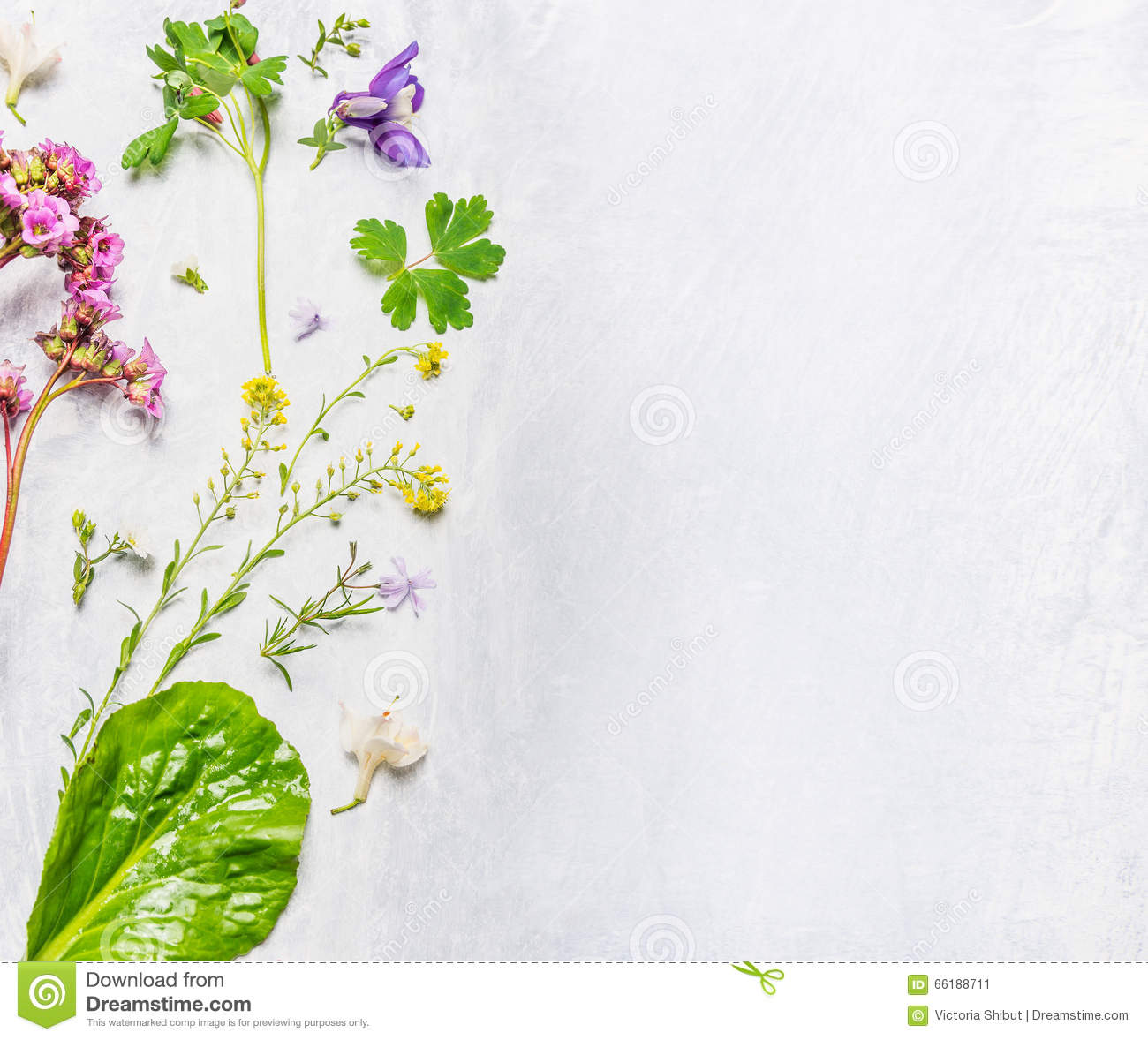 Plants for spring and summer - Various Of Spring Or Summer Flowers And Plants On Light Wooden Background Top View