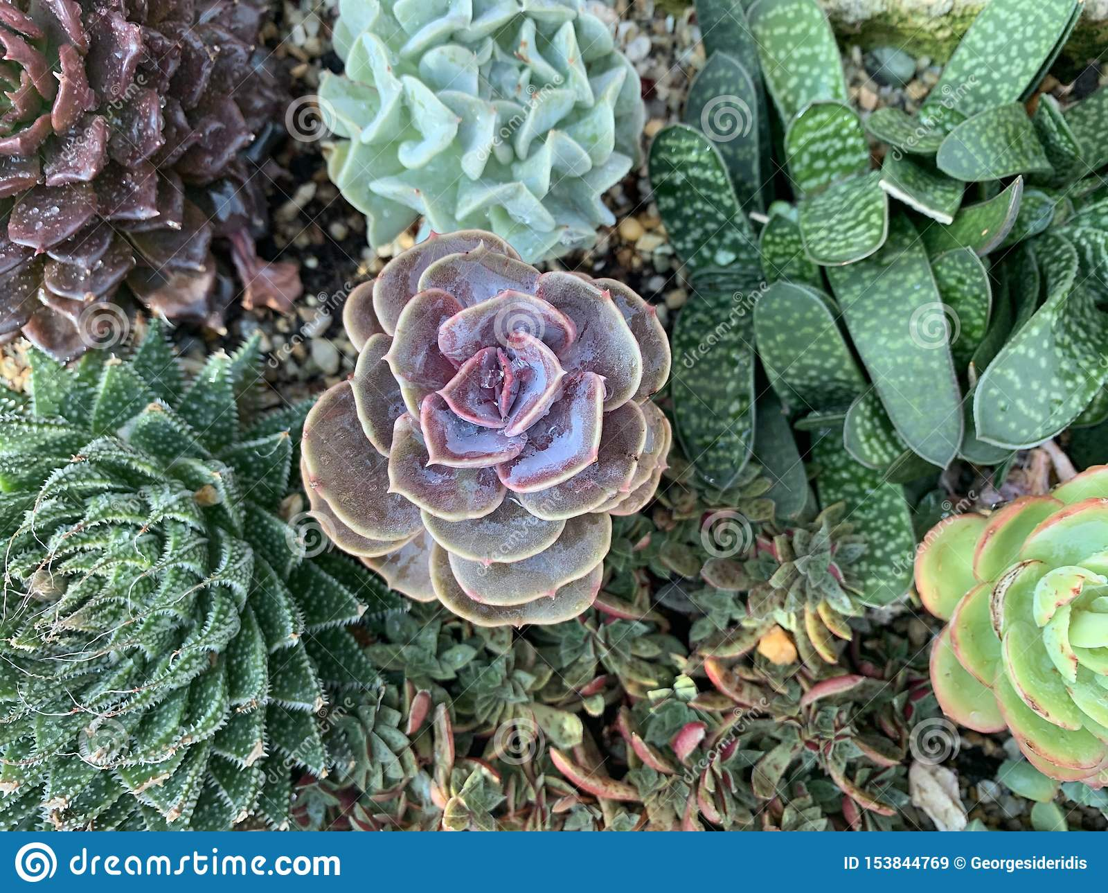 Succulents Stock Image Image Of Flowers Aesthetic 153844769