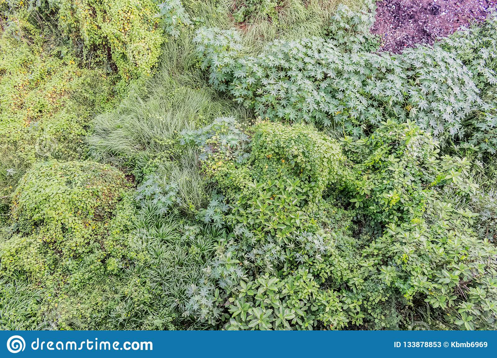 Various Types Of Shrubs Bushes Close View With Greenery Leaves