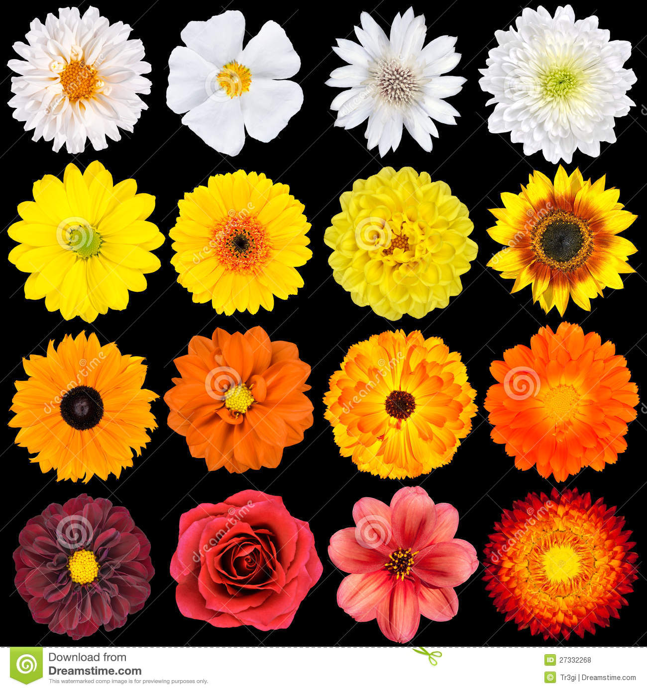 Red Orange Flower Names