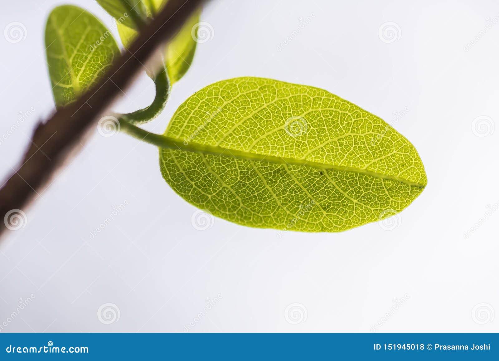 Varje blad är ett mirakel av naturen i sig
