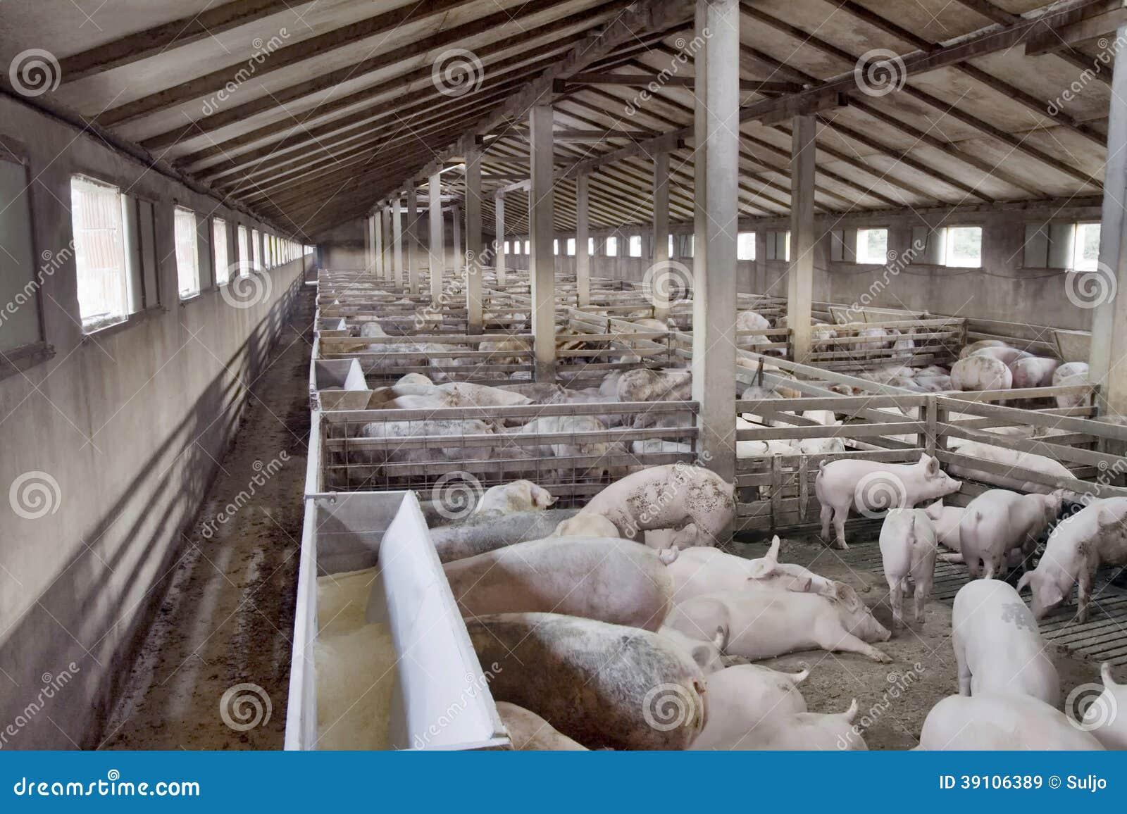 Varkensfokkerij