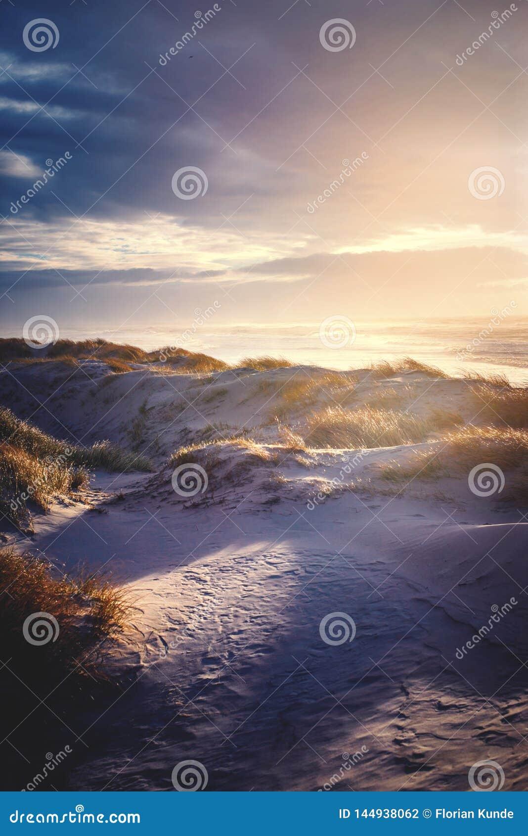 Varm solnedgång över de danska Nordsjödyerna