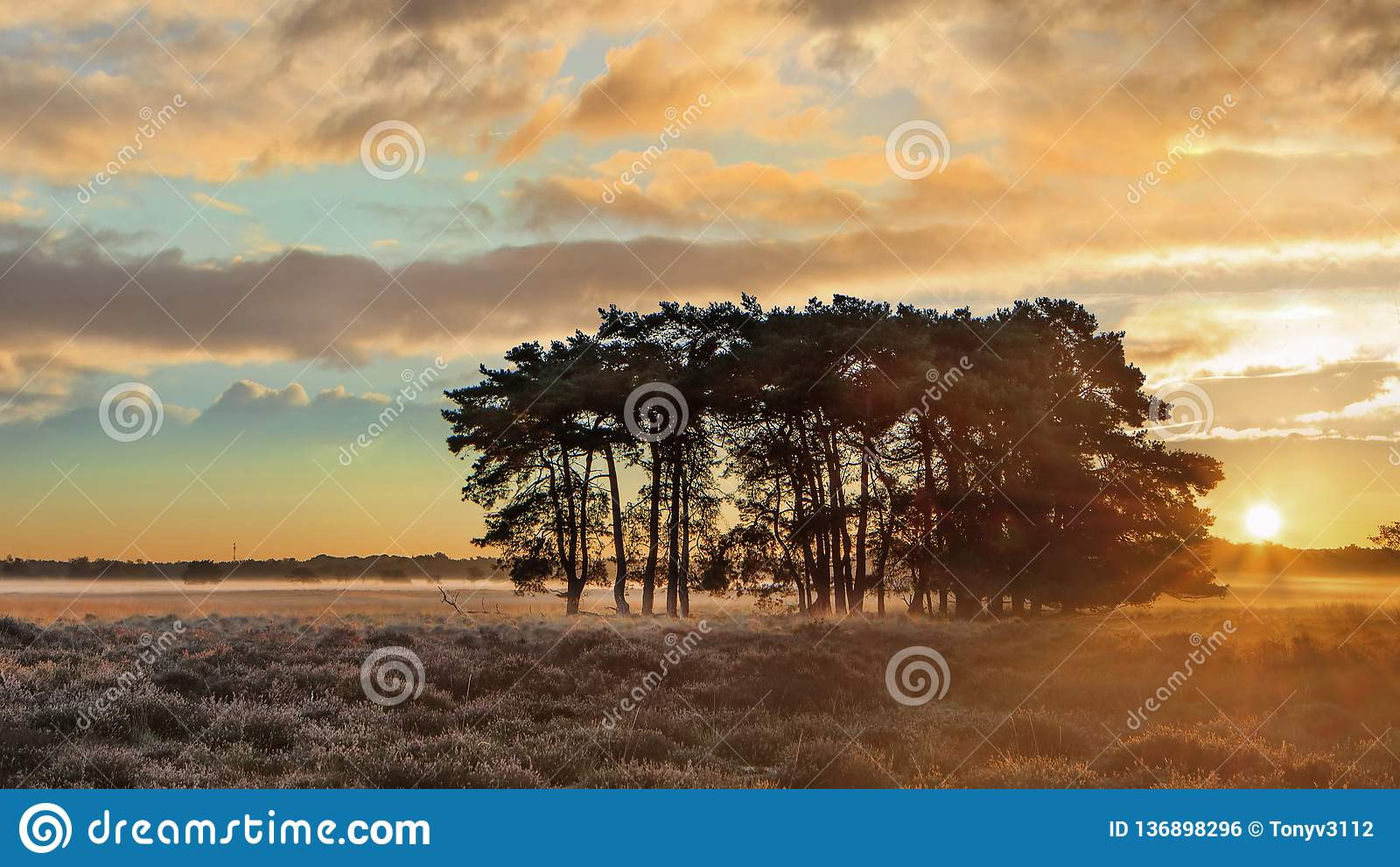 Varma solstrålar över en stillsam hed under gryning på Regte Heide, Goirle