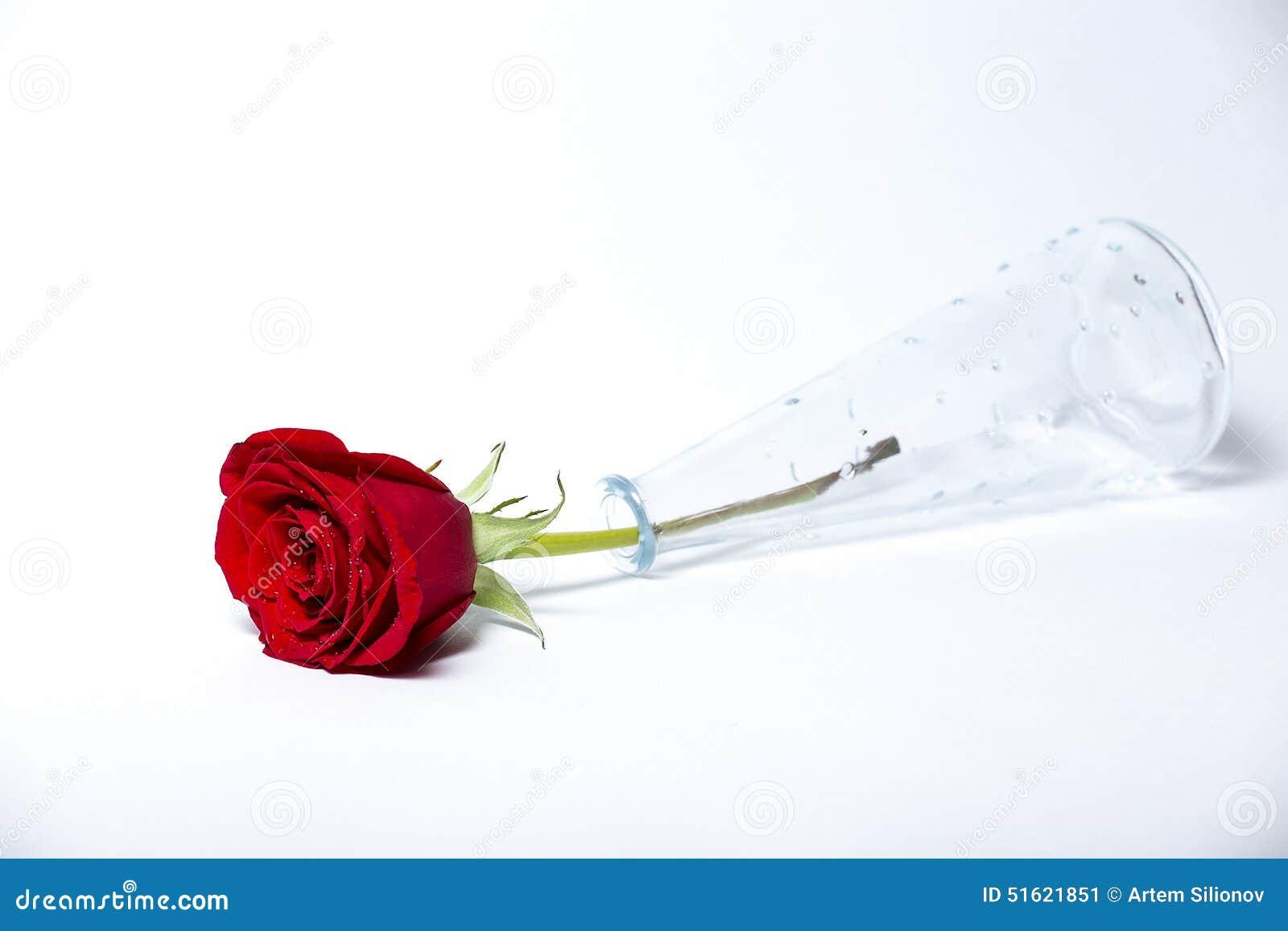 vase en verre et une rose rouge photo stock image 51621851. Black Bedroom Furniture Sets. Home Design Ideas