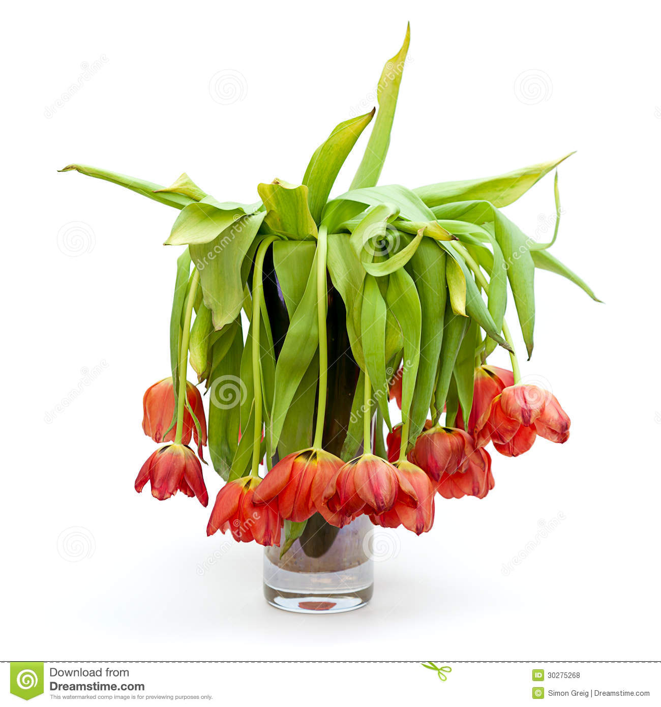 Tulips  Send Beautiful Tulip Bouquets  1800Flowerscom