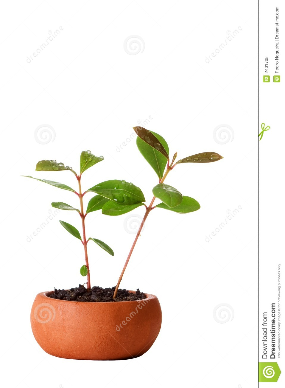 Vase_and_plant