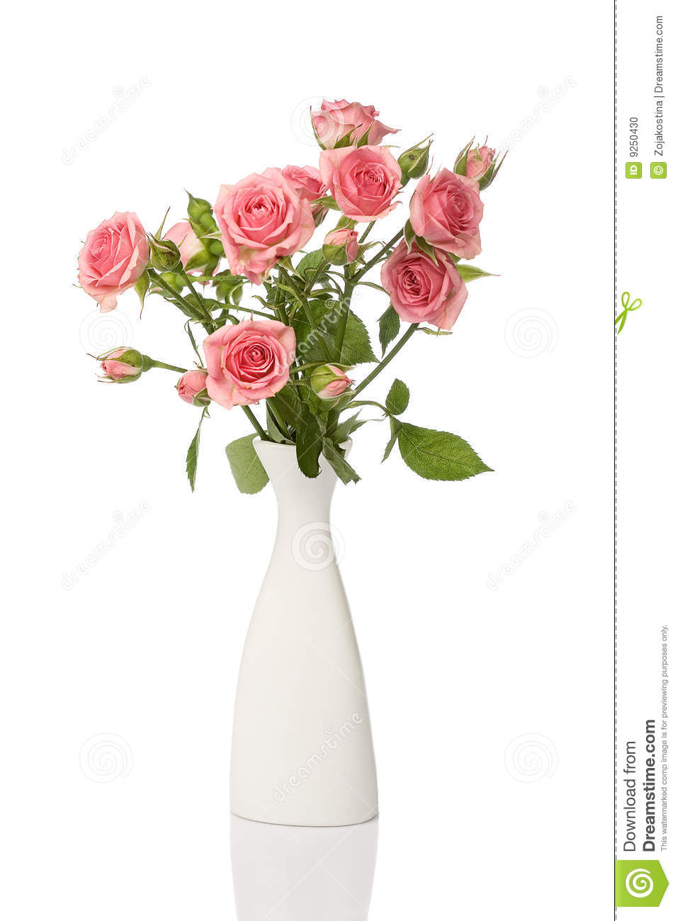 Vase with roses isolated on white