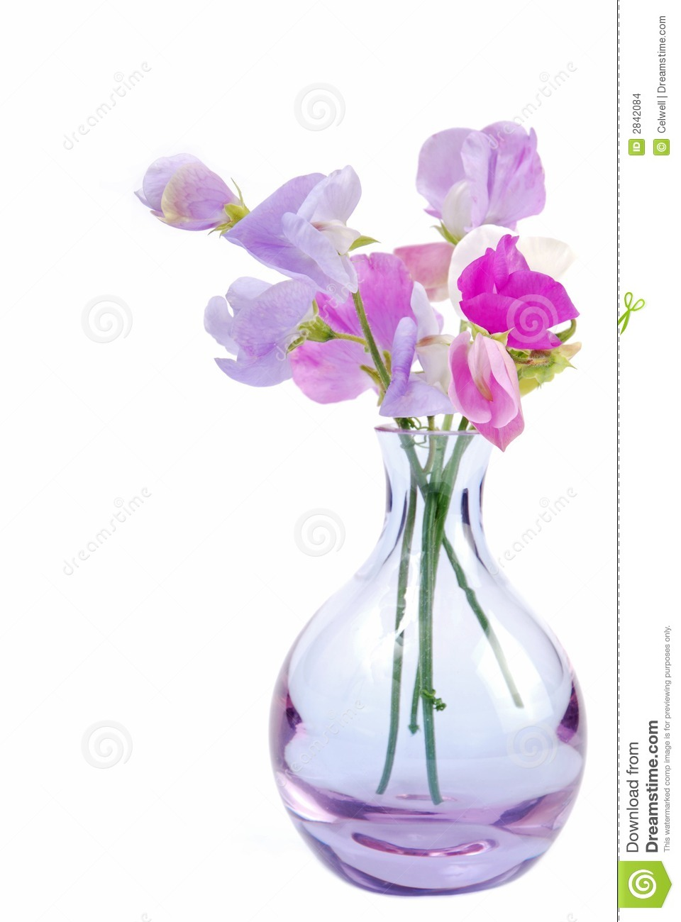 Vase of sweet pea flowers stock photo image of peas background vase of sweet pea flowers reviewsmspy