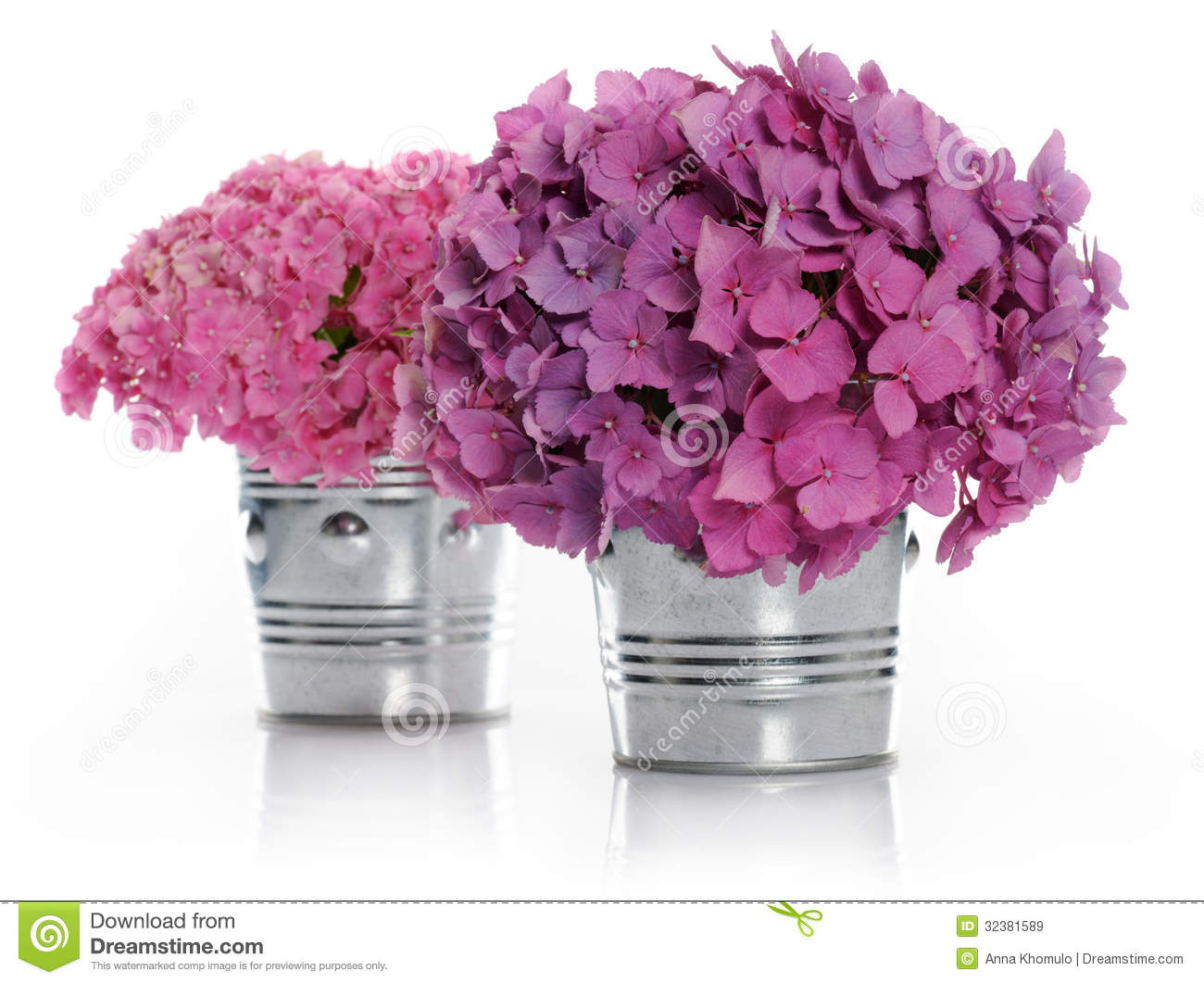 vases avec des bouquets d 39 hortensia image stock image 32381589. Black Bedroom Furniture Sets. Home Design Ideas
