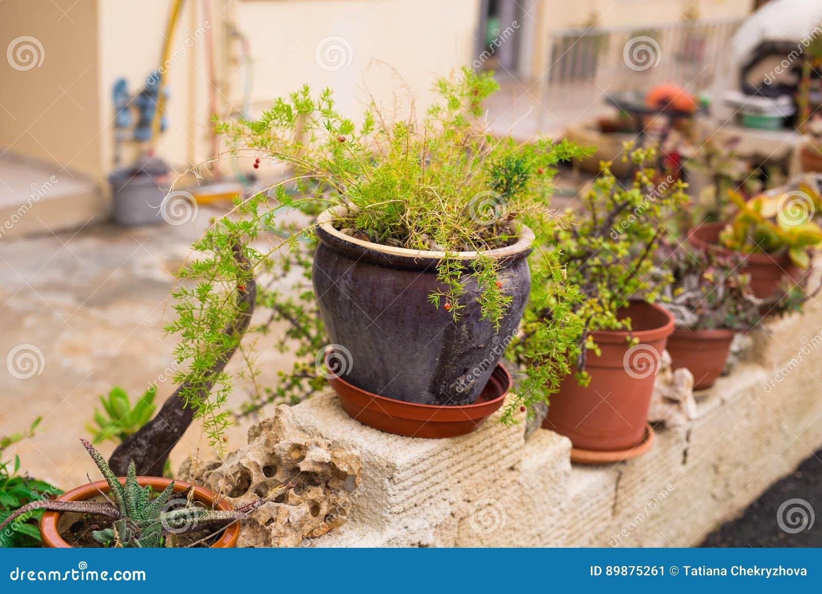 Vasi Da Fiori All\'aperto Per Il Piccolo Giardino, Patio O Terrazzo ...