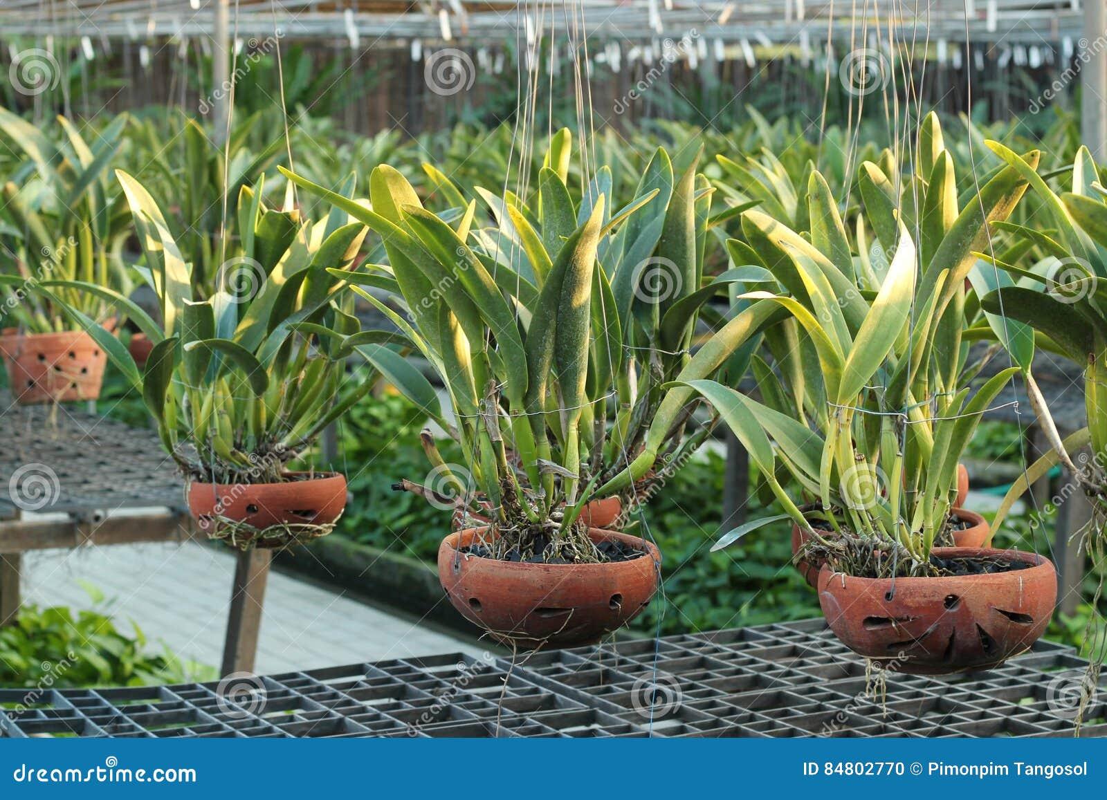 Orchidee Da Esterno.Vasi Da Fiori Dell Orchidea Su Una Scuola Materna Della