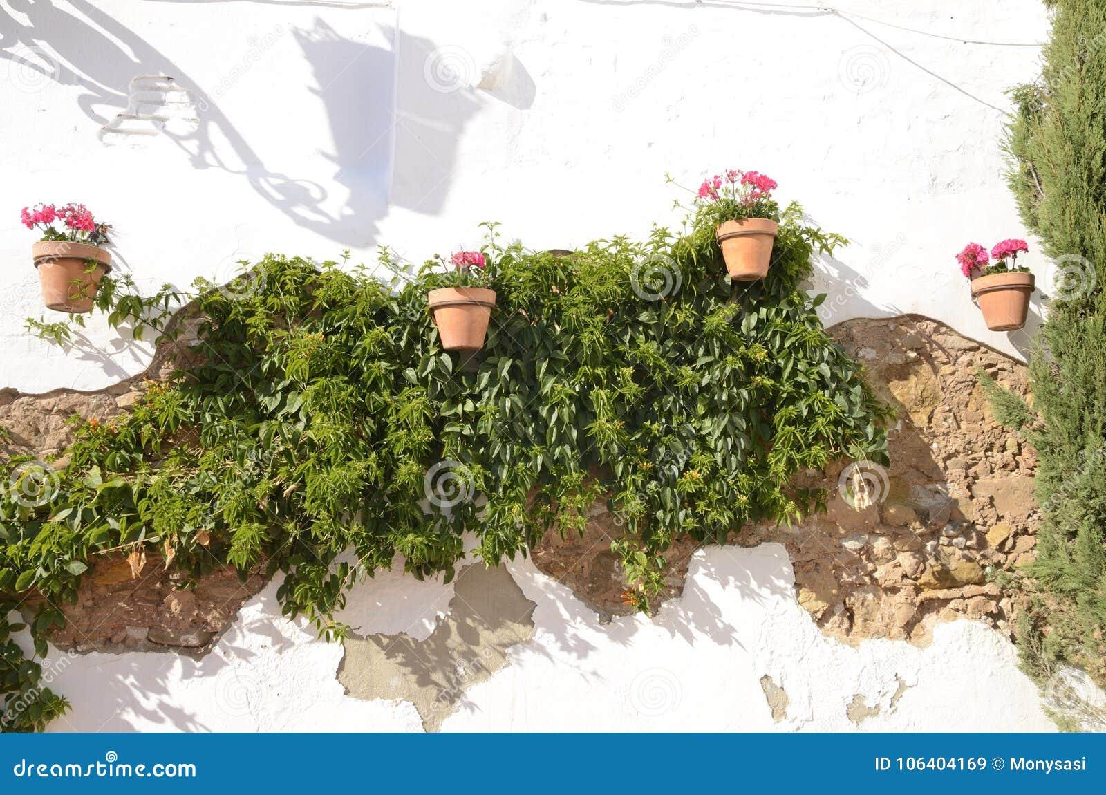 Rosa Rampicante In Vaso vasi da fiori e piante rampicanti immagine stock - immagine