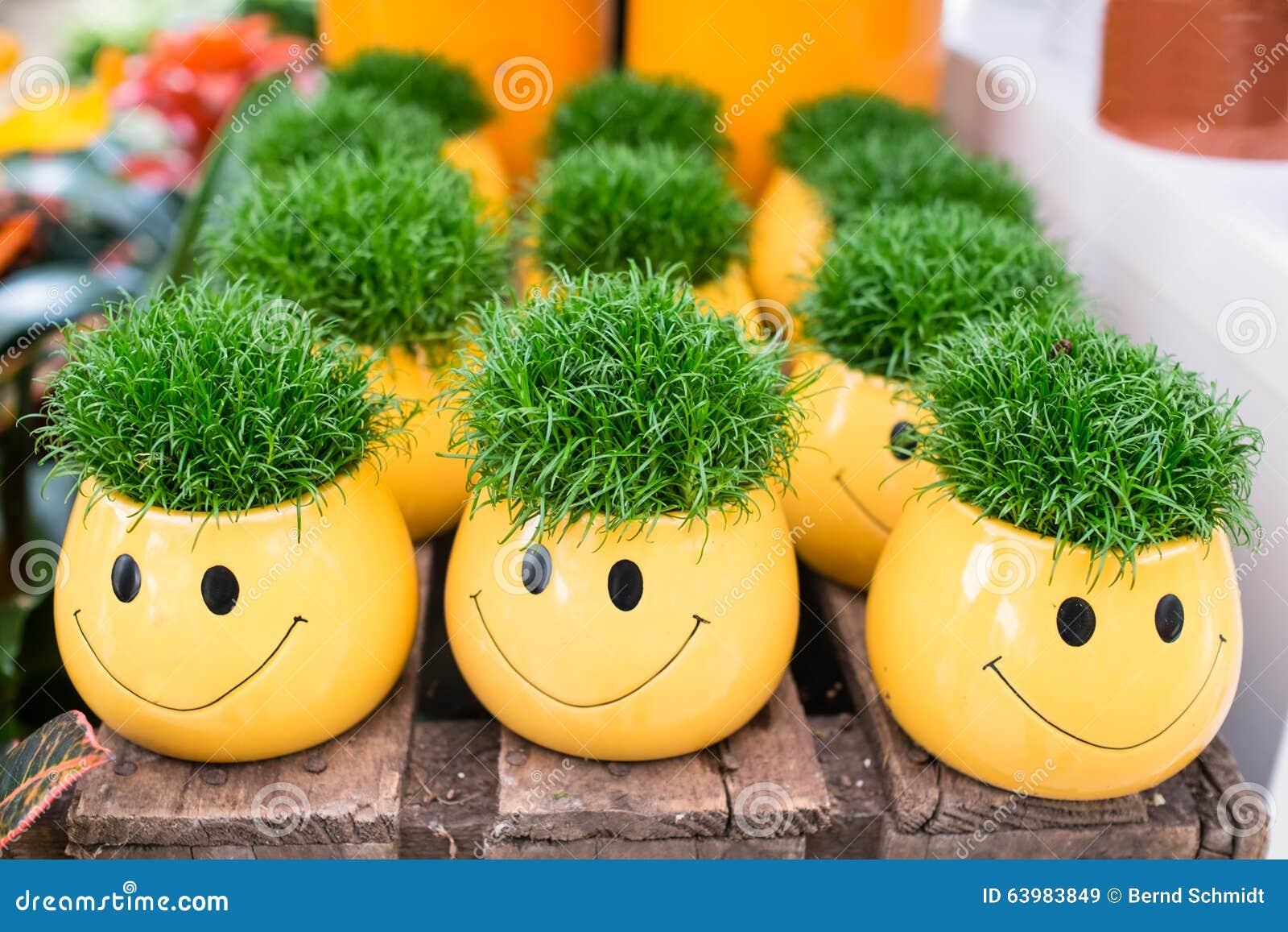 Vasi da fiori gialli con smilie ed erba verde fotografia for Vasi erba