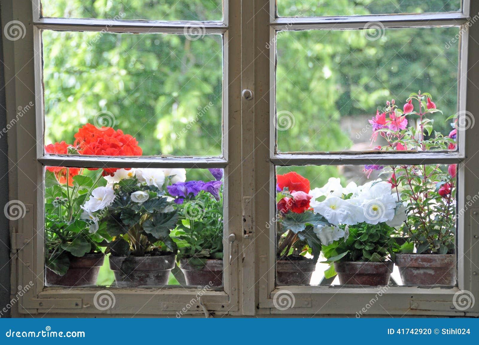 Vasi da fiori sul finestra davanzale fotografia stock immagine di chiuso sporgenza 41742920 - Davanzale finestra interno ...