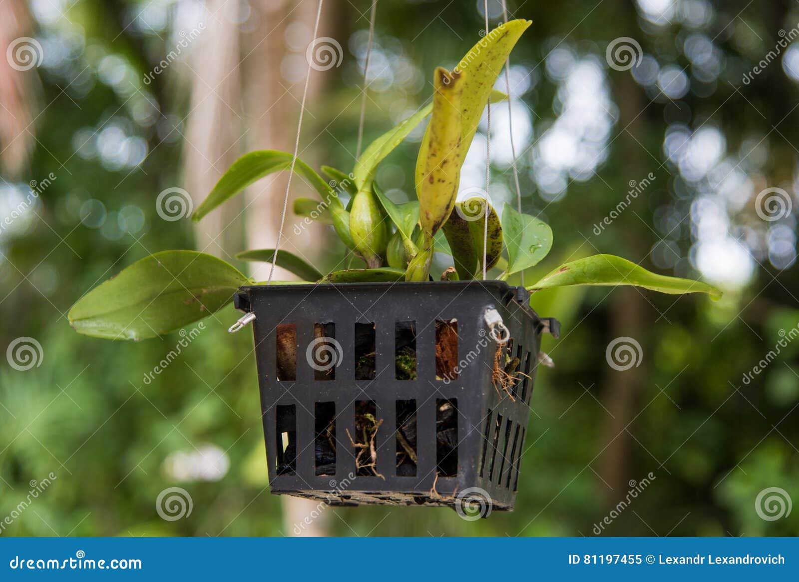 Vaso con la pianta