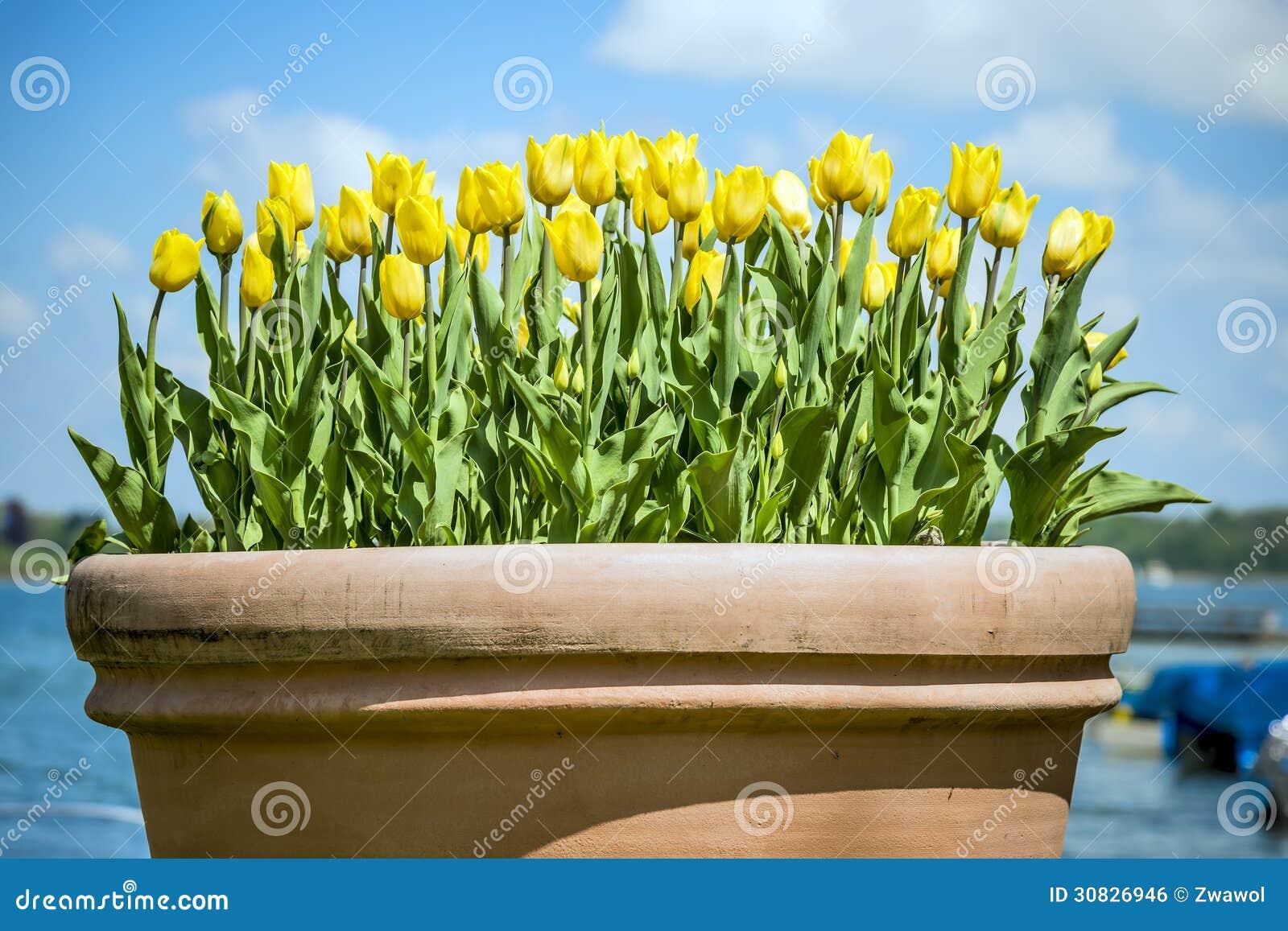 Vaso di argilla con i fiori in Chiemgau