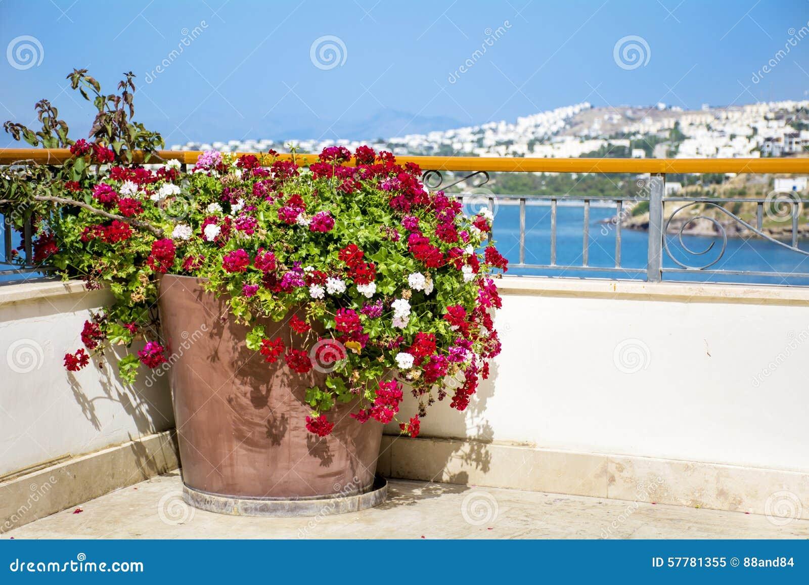 Vaso di argilla con i fiori di fioritura del geranio su un terrazzo