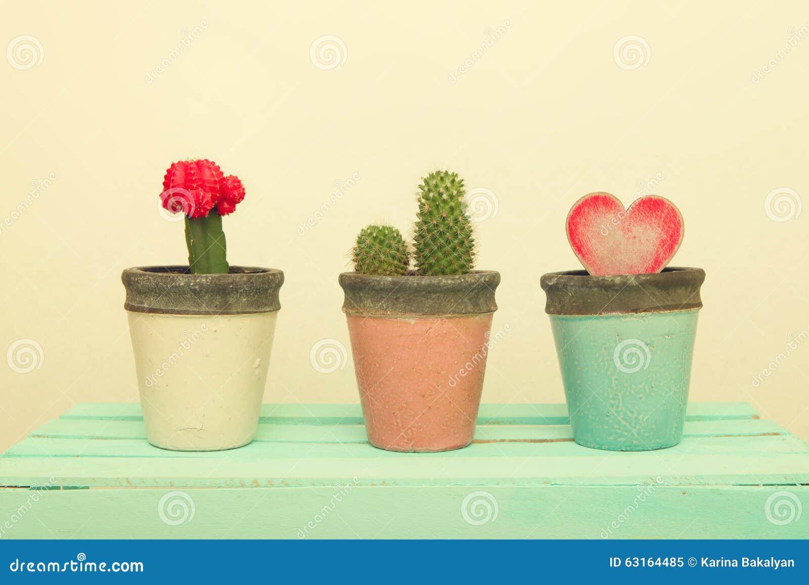 Vaso di argilla tre con il cactus ed il cuore di legno