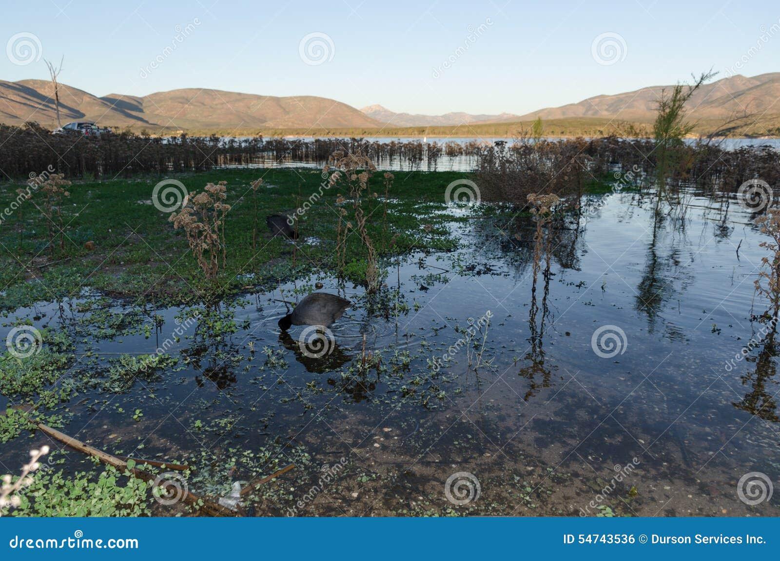 Vasser i en sjö