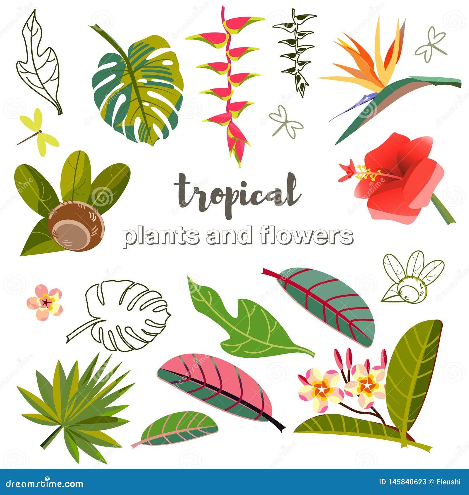 Vastgestelde vectorbeelden van bladeren, bloemen en vruchten stylization van Tropische installaties