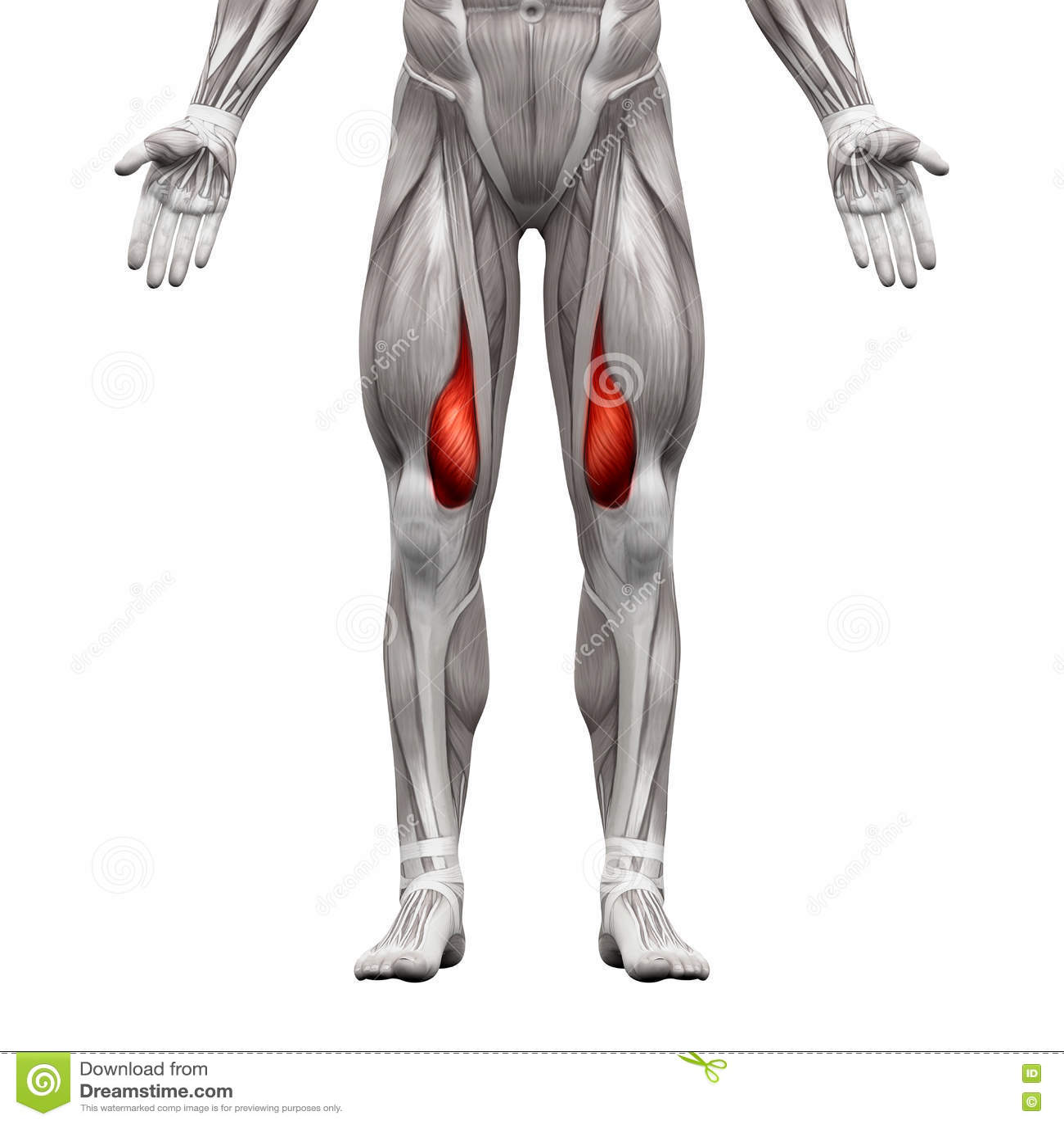 Nett Muskelanatomie App Galerie - Anatomie Von Menschlichen ...