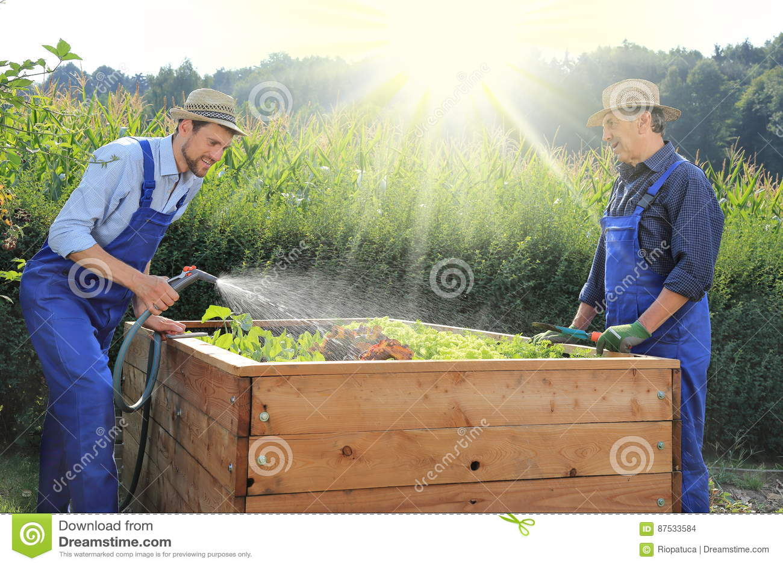 Vater und sohn die auf einem angehobenen pflanzenden bett for Garten arbeiten
