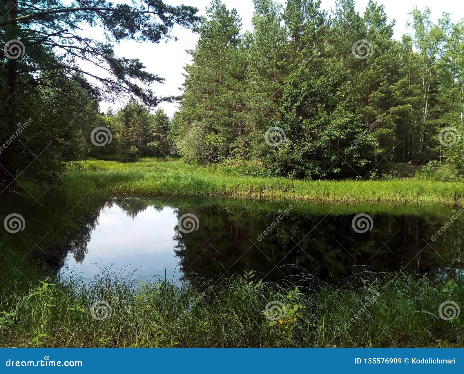Vatten sjö, landskap, natur, flod, himmel, reflexion, träd, skog, sommar