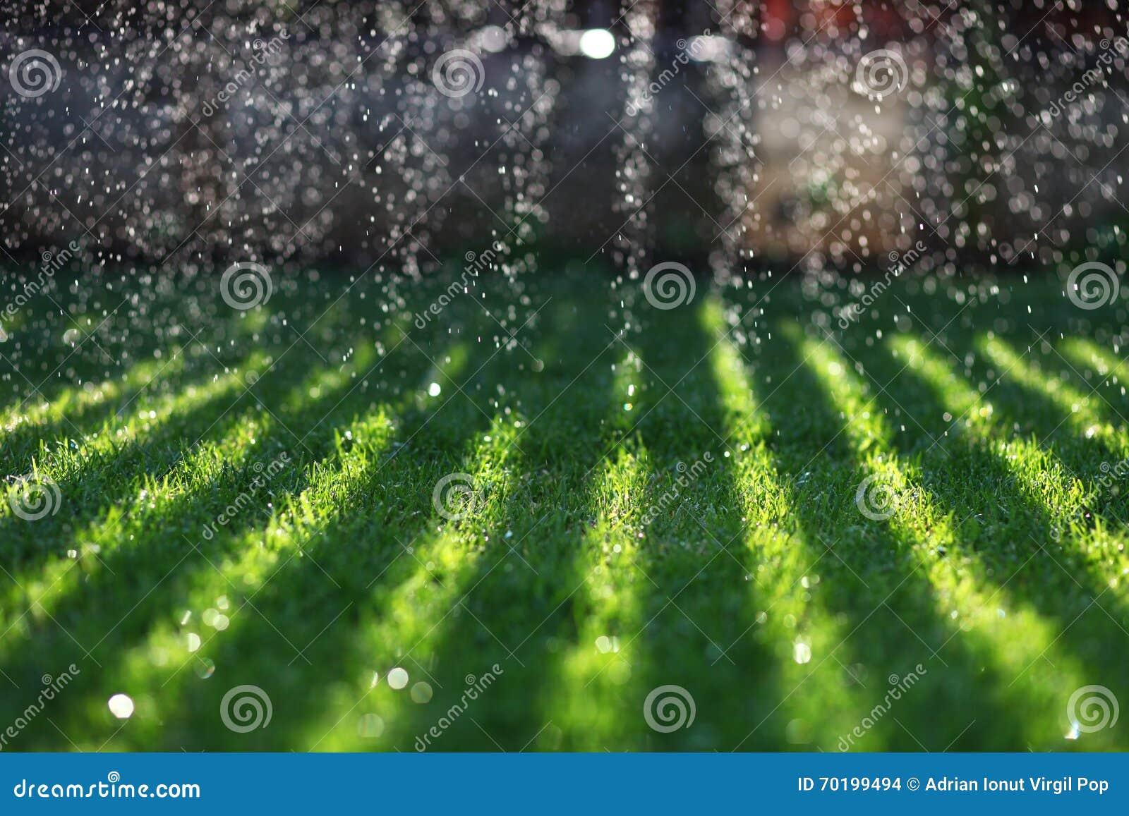Vatten som faller på grön gräsmatta