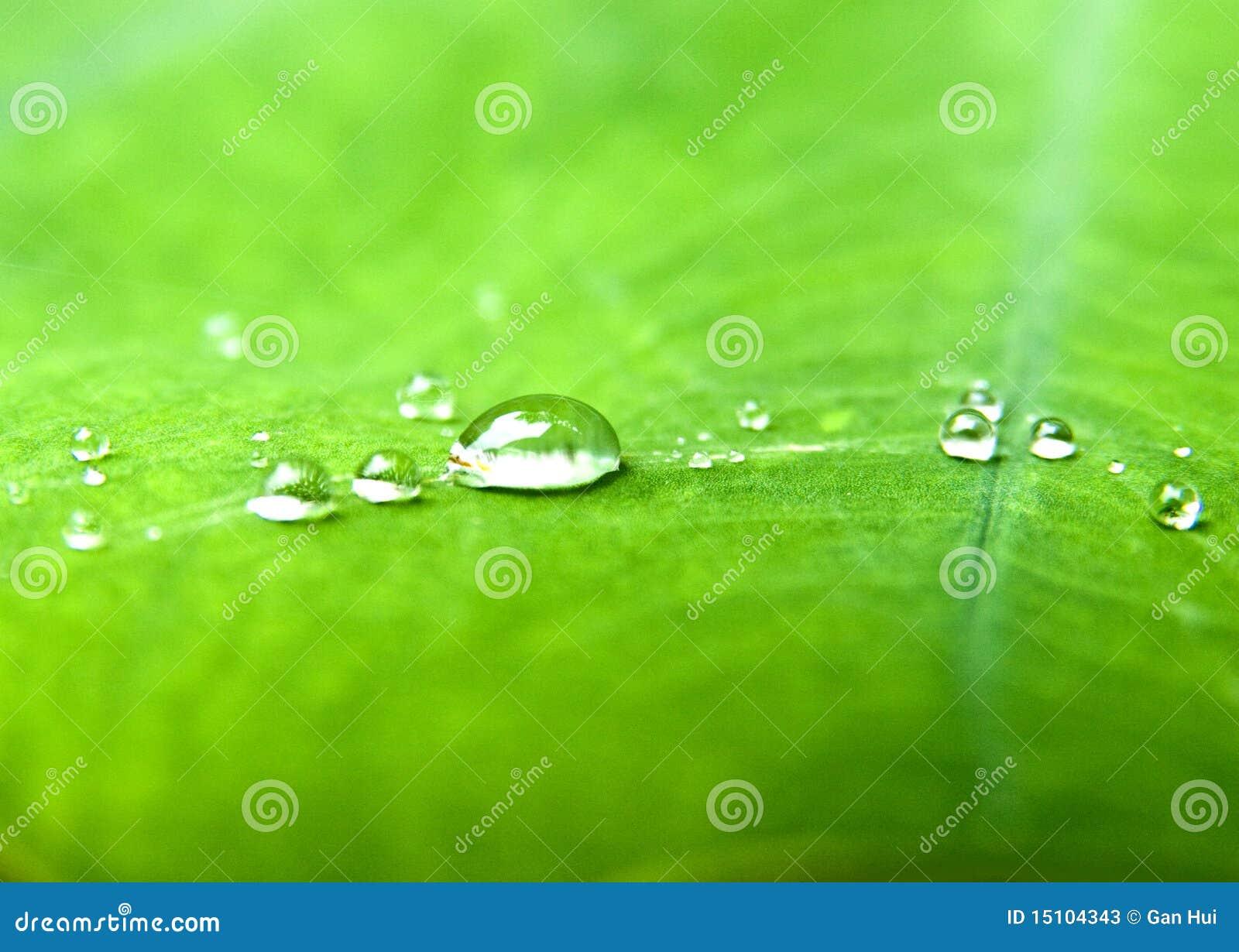 Vattendroppar i grön leaf