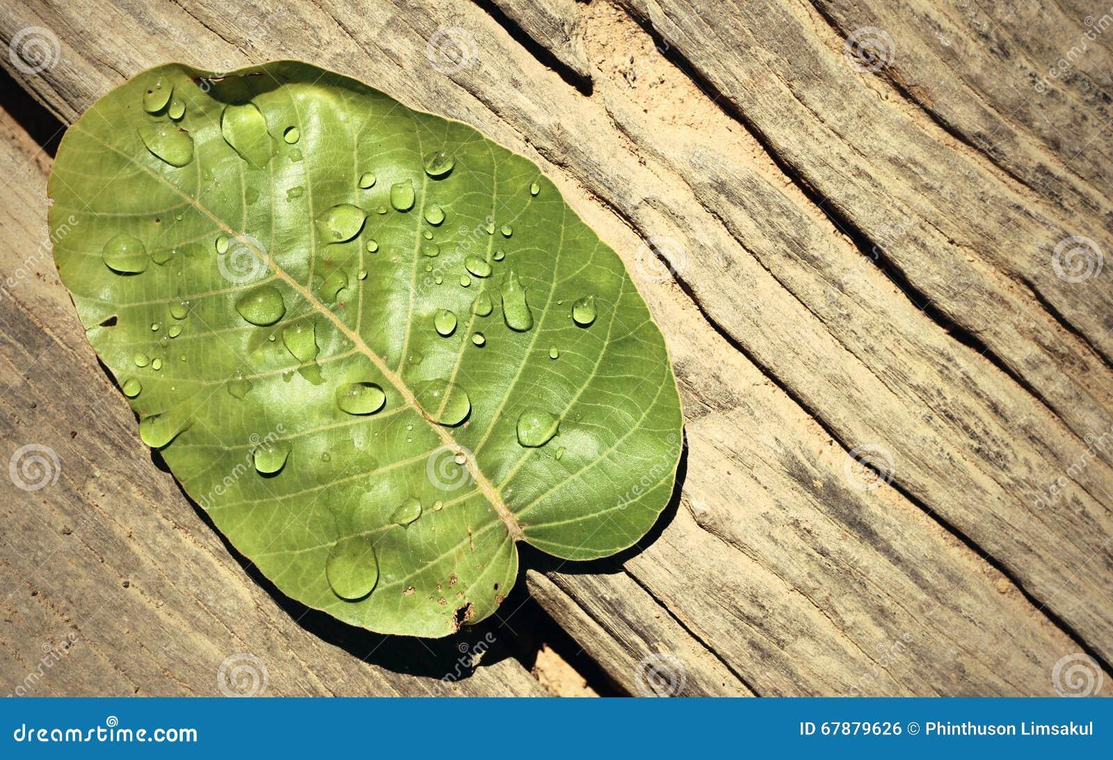 Vattendroppar på leaves