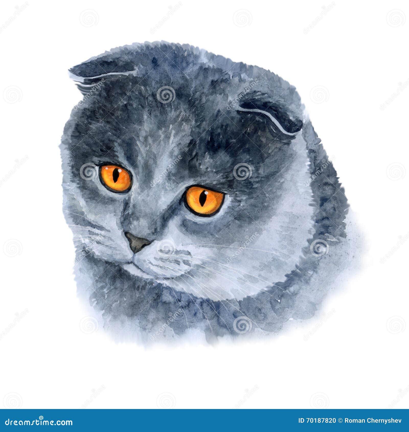 Vattenfärgcloseupstående av den gulliga katten för skotskt veck på vit bakgrund