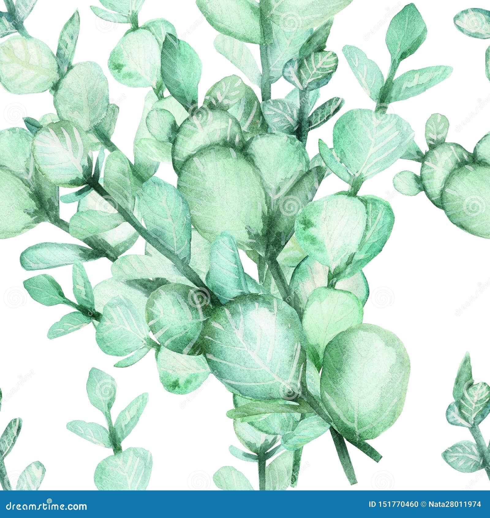 Vattenfärghandmålning av eukalyptusfilialer med gröna sidor Sömlösa bakgrunds-, vår- eller sommarblommor för inbjudan, w