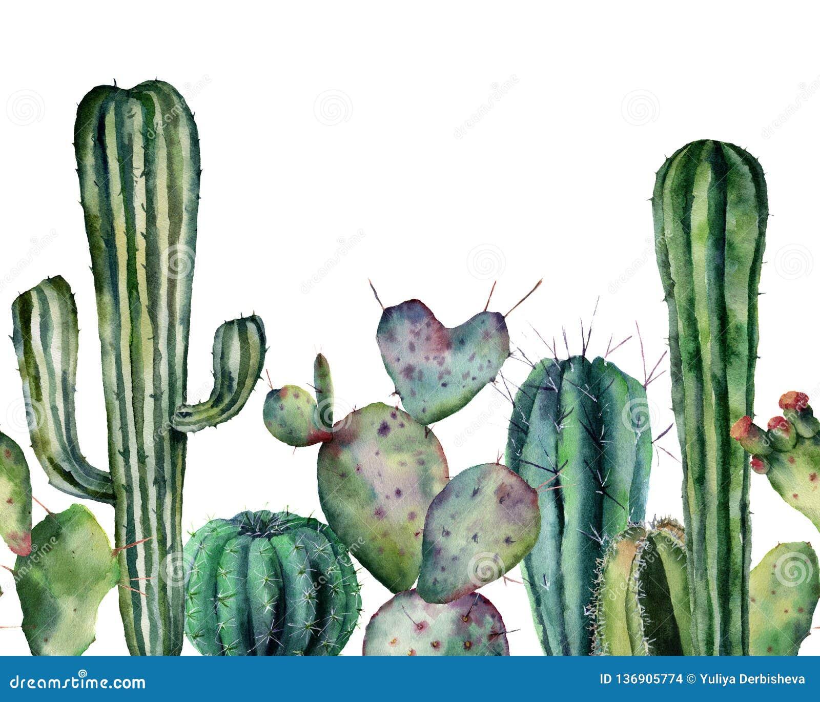 Vattenfärgkaktusmodell Utdragen sömlös prydnad för hand med ökenväxter som isoleras på vit bakgrund Blomningkakturs