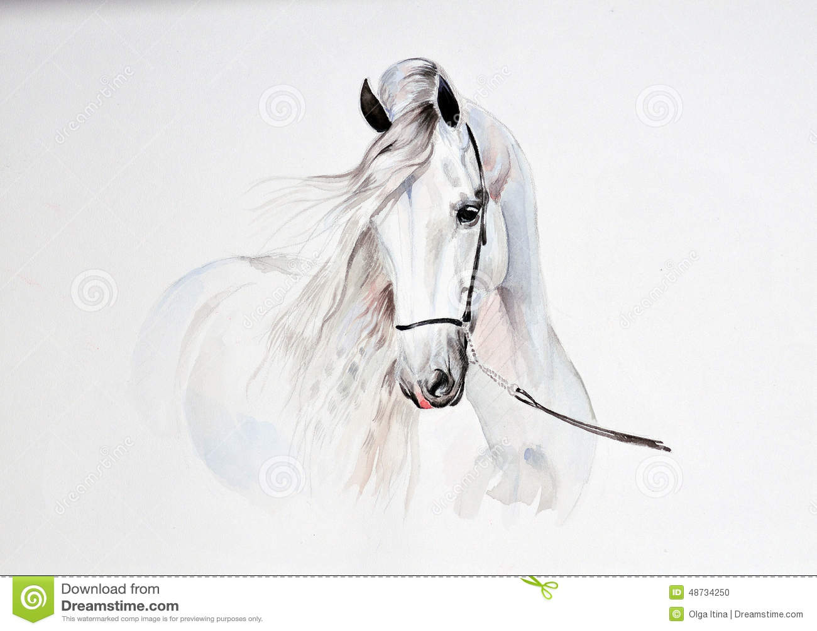 Vattenfärgmålning av den andalusian hästståenden