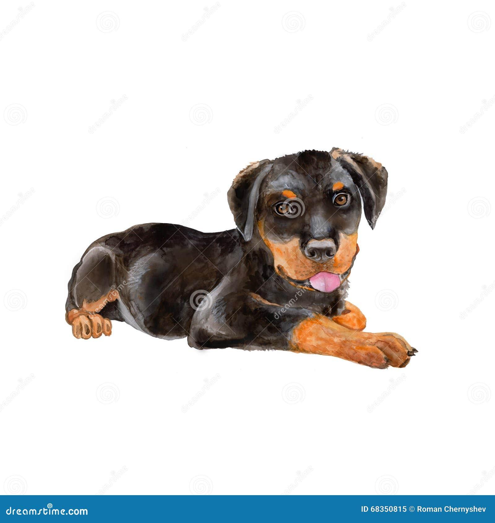 Vattenfärgstående av svart tysk Rottweiler Metzgerhund, Rott, Rottie avelhund på vit bakgrund
