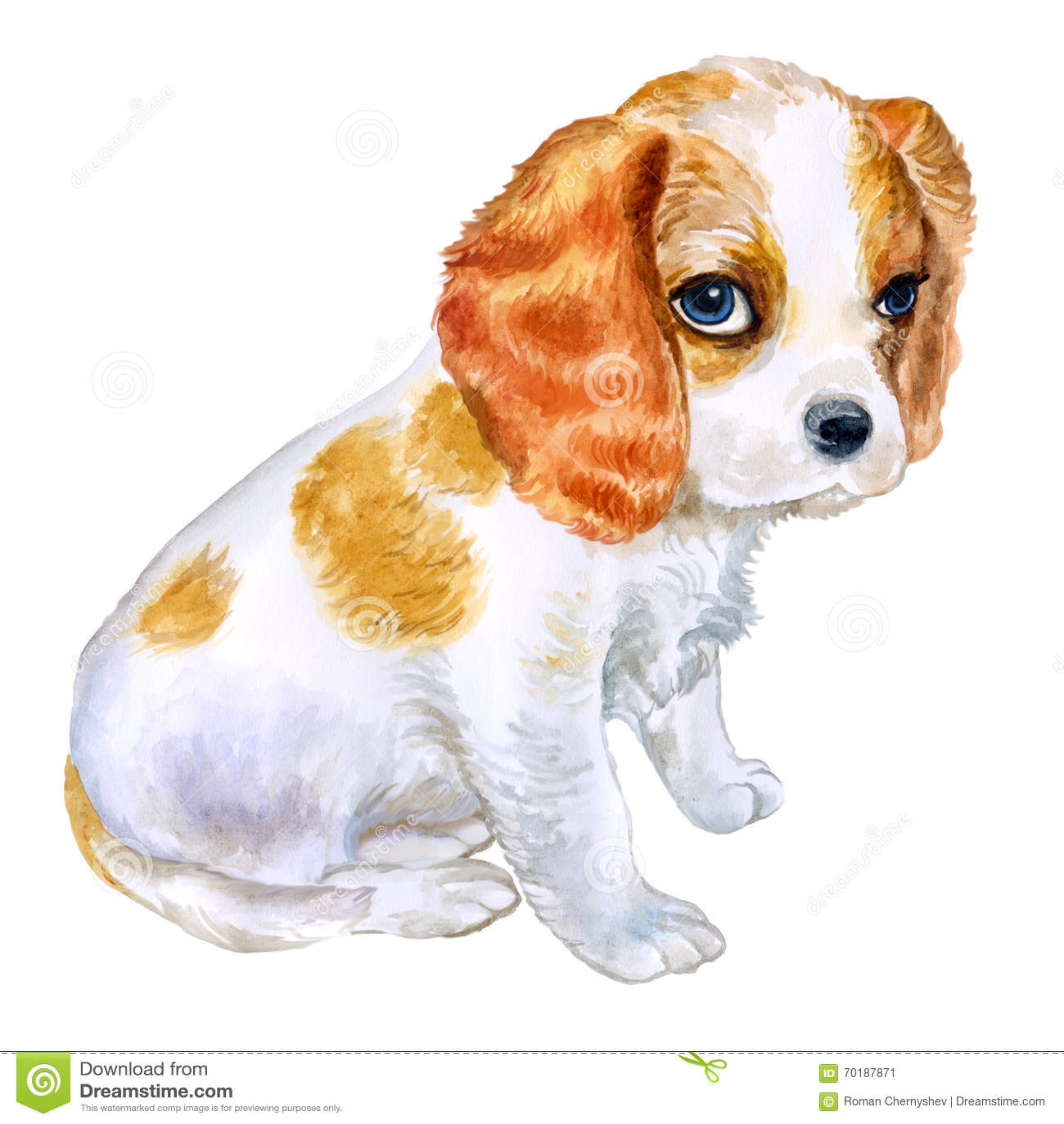 Vattenfärgståenden av den engelska Blenheim-färgade stolta konungen Charles Spaniel föder upp hunden