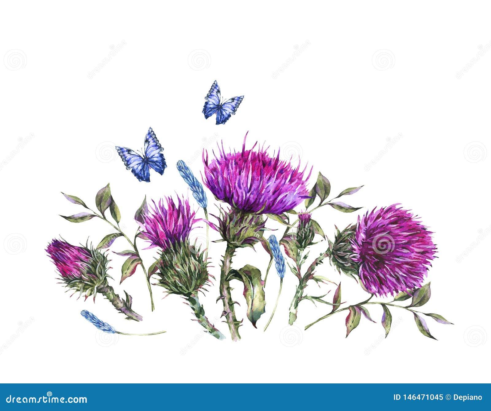 Vattenfärgtistel, blåa fjärilar, illustration för lösa blommor, kort för hälsning för ängörttappning