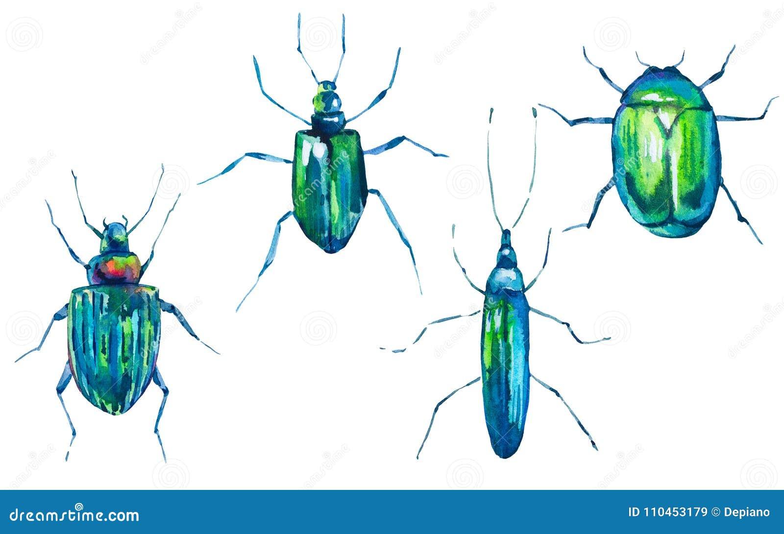 Vattenfärguppsättning av gröna skalbaggar