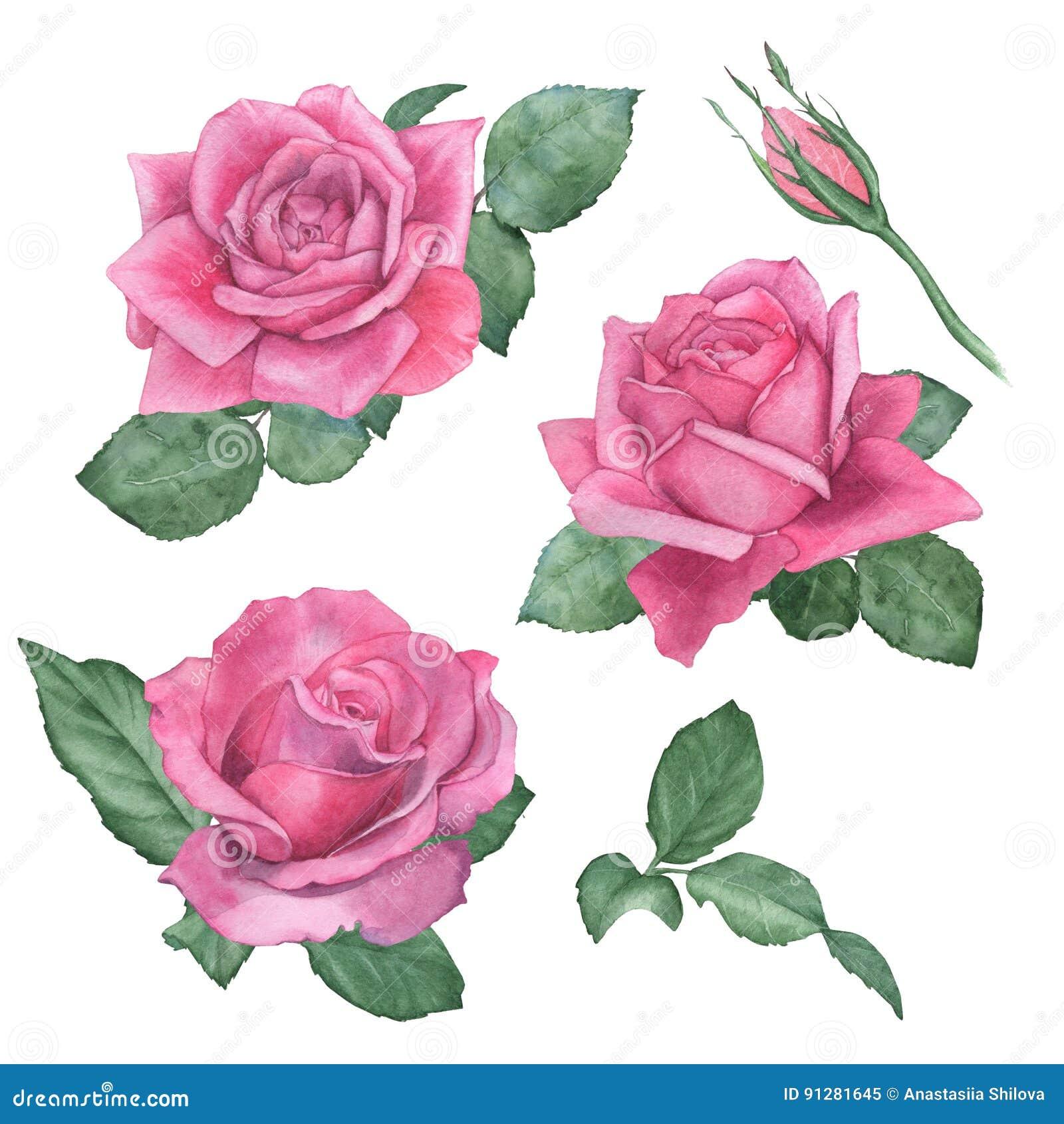 Vattenfärguppsättning av rosor teckningen hand henne morgonunderkläder upp varmt kvinnabarn
