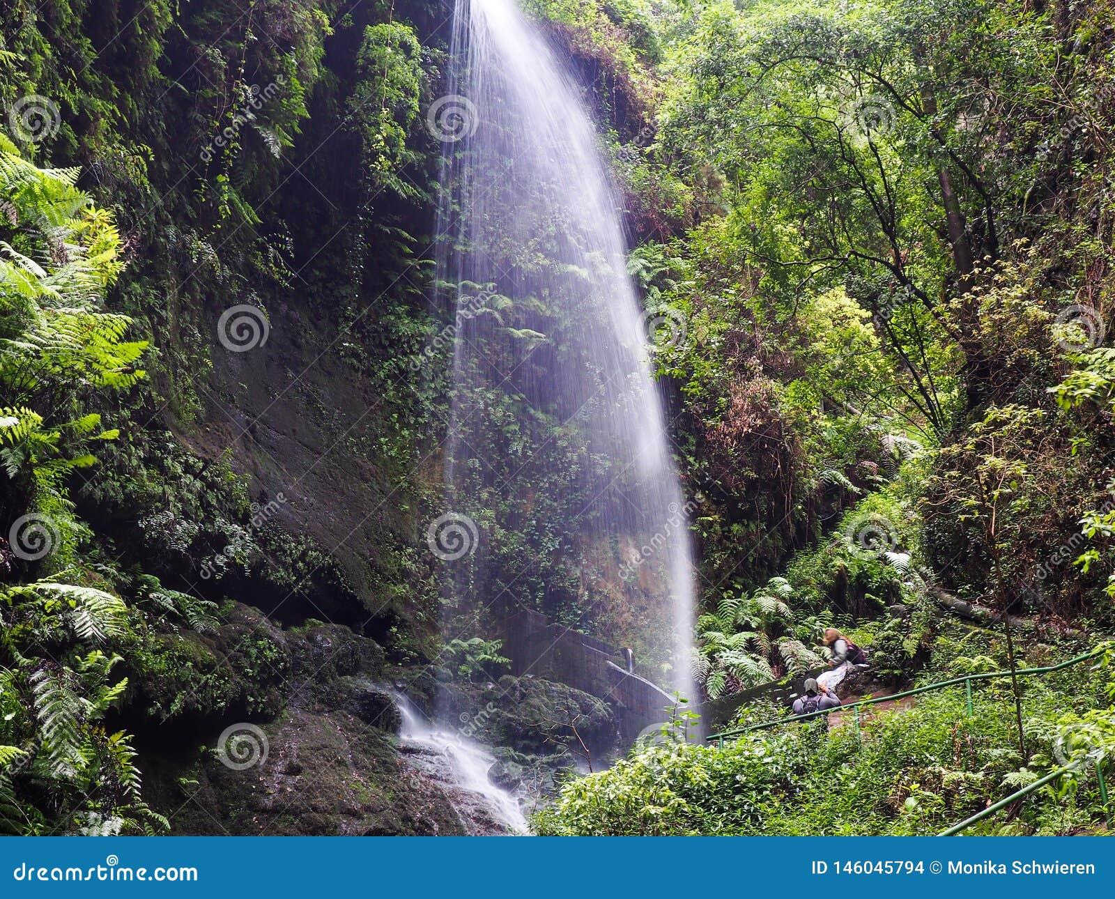 Vattenfall i mitt av den Canarian djungeln på La Palma, en kanariefågelö