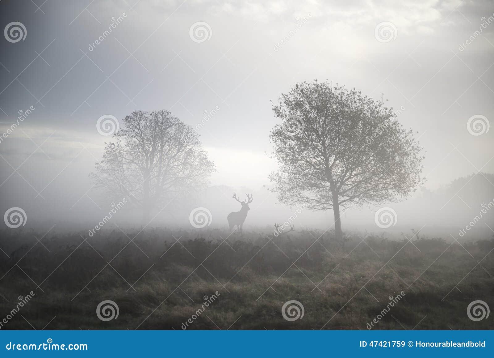Veado dos veados vermelhos na paisagem nevoenta atmosférica do outono